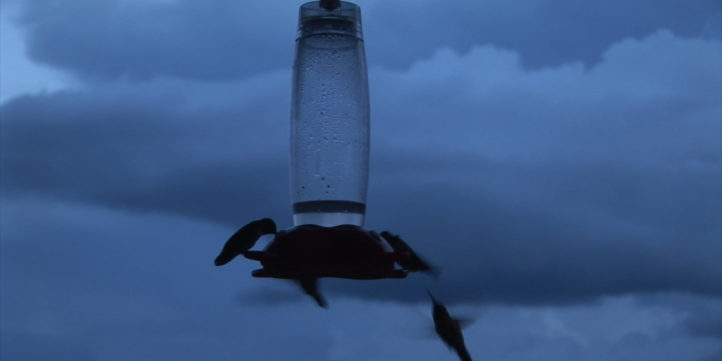hummingbird feeding in evening